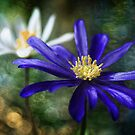 Anemone charm by Mandy Disher