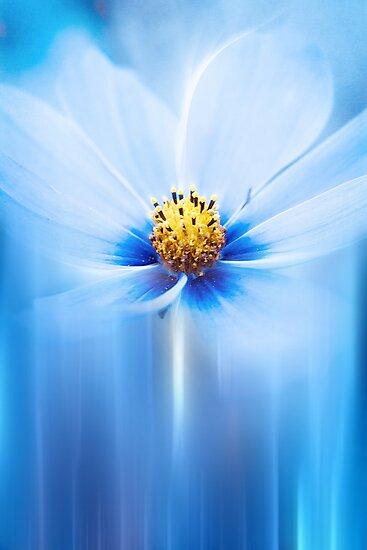 BLUE by ♛ VIAINA