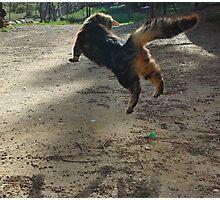 flying cat Photographic Print
