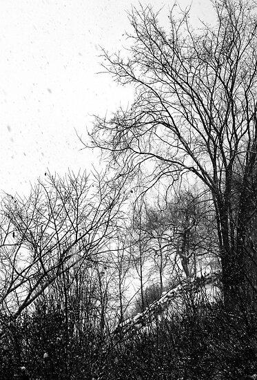 Big Flakes 2, Ottawa River, Ontario by Debbie Pinard