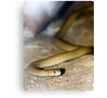 Yellow Faced Whip Snake Canvas Print