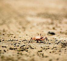 Costa Rican Crab by Jacki Campany