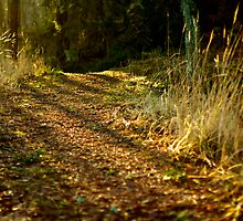 Enchanted Forest by Mihaela Limberea