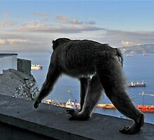 The Apes of Gibraltar by buttonpresser