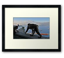 The Apes of Gibraltar Framed Print
