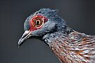 African Speckled Pigeon by Savannah Gibbs