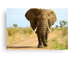 I'M RIGHT BEHIND YOU! - THE AFRICAN ELEPHANT – Loxodonta Africana Canvas Print