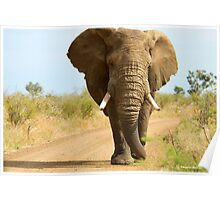 I'M RIGHT BEHIND YOU! - THE AFRICAN ELEPHANT – Loxodonta Africana Poster