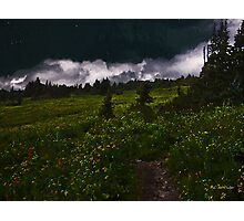 Heading Home Through the Meadow Photographic Print
