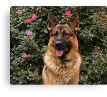 Chance--German Shepherd Canvas Print