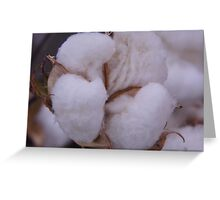 COTTON for the BOWL Greeting Card