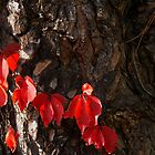 Plants of Autumn by Rae Tucker