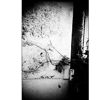 vine Photographic Print