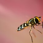 Hover and Fly by sammythor