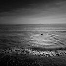 A WEE DOG ENJOYING A SWIM IN THE OCEAN by leonie7