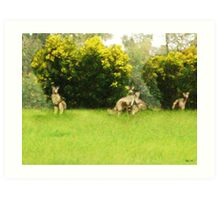 Kangaroos in the green Art Print