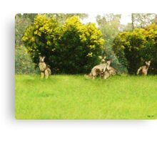 Kangaroos in the green Canvas Print