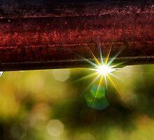 Sparkle by Barbara Anderson
