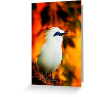 a beautifully curious bird Greeting Card