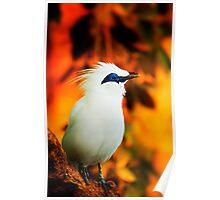 a beautifully curious bird Poster