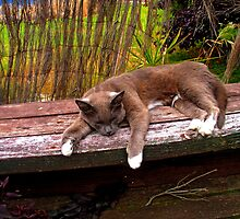 SLEEPY CAT by Kenneth Caleno