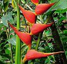 hawaiian botanical gardens II by PJS15204