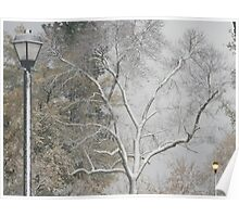 (close) Tree With Lamp Posts Poster