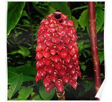 hawaiian botanical gardens III Poster