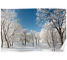 Winter morning frosty trees Poster