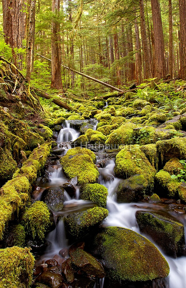 Olympic National Park Stream by Jeff Hathaway