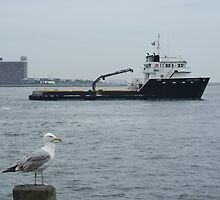 Onlooker to a travelling Fishing Vessel @ Boston Harbor by Robert Dion