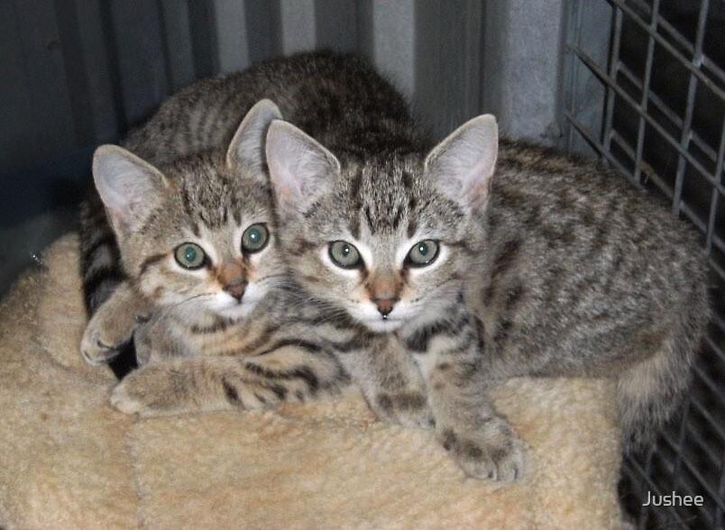 Kittens by Jushee