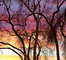 Colorful Silhouetted Trees 37 by Bo Insogna