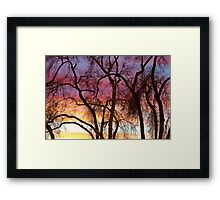 Colorful Silhouetted Trees 37 Framed Print