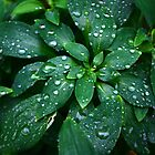 Water Drops by Jushee