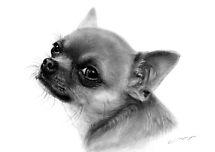 Chihuahua by Danguole Serstinskaja