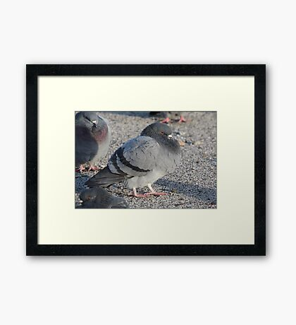 The Symphony Conductor Didn't Like What He Heard 3679 Framed Print