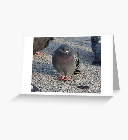 'I have a Royal Purple Bib'  3690 Greeting Card