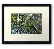 Live Oak Trees With Spanish Moss Framed Print