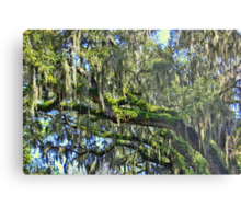 Live Oak Trees With Spanish Moss Metal Print