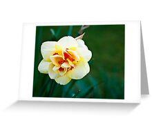 Daffodil #29 Greeting Card