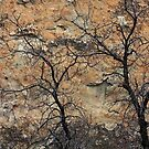 Trees and Sandstone by Julia Washburn