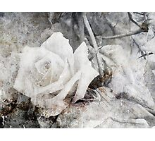 Rose Grunged Photographic Print