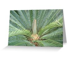 Cycad with new leaves Greeting Card