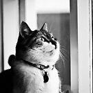 Loppa my cat by Ólafur Már Sigurðsson