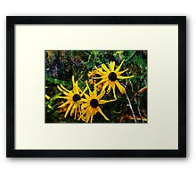 Three Flowers Framed Print