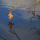 Lone Leaf by Lynn Wiles