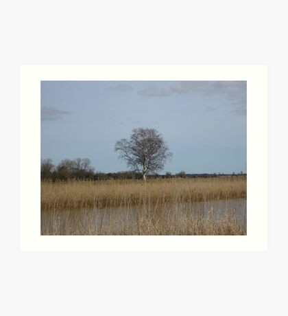 Tree by the river Art Print