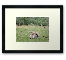 Bright Eyes Bushy Tail Framed Print