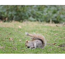 Bright Eyes Bushy Tail Photographic Print